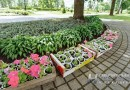 Подстриженные деревья и кустарники, ухоженные газоны и цветущие клумбы: кто занимается озеленением Новополоцка