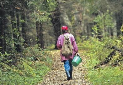 Грибникам на заметку. Что делать если вы заблудились в лесу.
