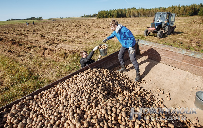 BRSM uborka kartofelja (4)