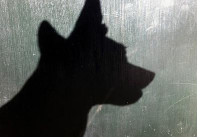 В Новополоцке собака укусила восьмимесячного малыша за голову
