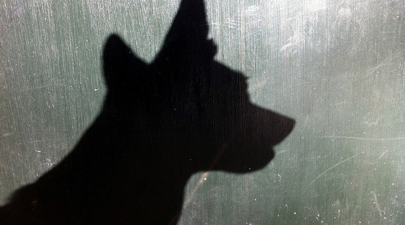 Dog head shadow.  Big ears.