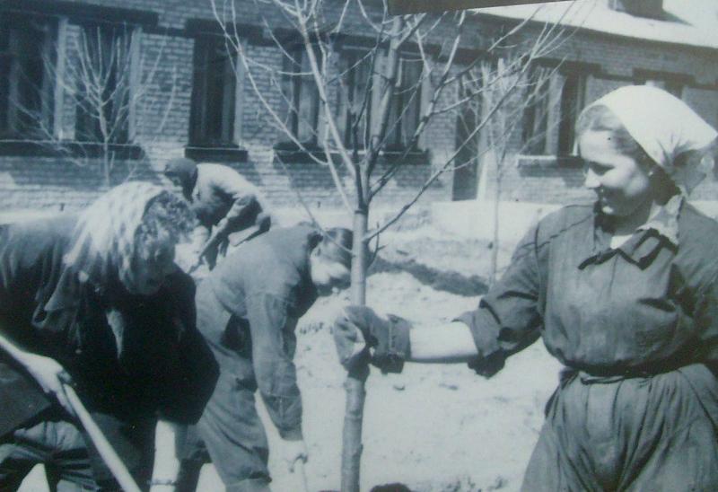 Озеленение города 1959 год