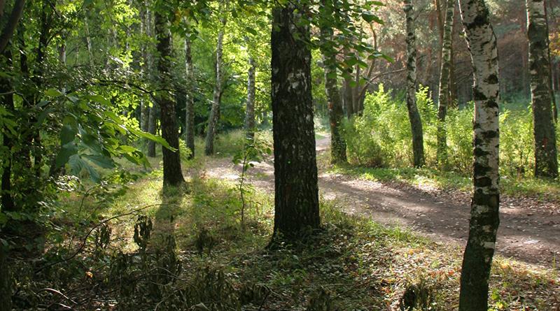 лес Фото Вячеслава Мальцева