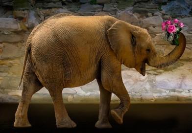 20 июня отмечают Всемирный день защиты слонов в зоопарках