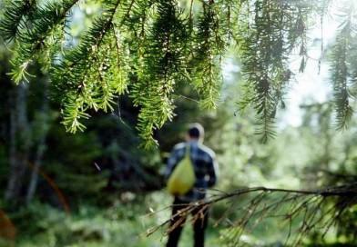 Что делать если заблудились в лесу