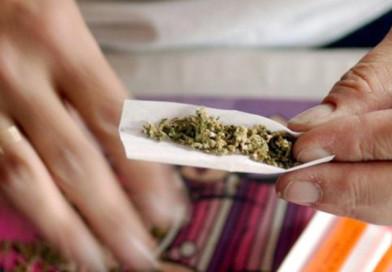 Канал поставки марихуаны перекрыт в Полоцком районе
