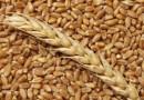 Витебская область первой среди регионов выполнила госзаказ по поставке зерна