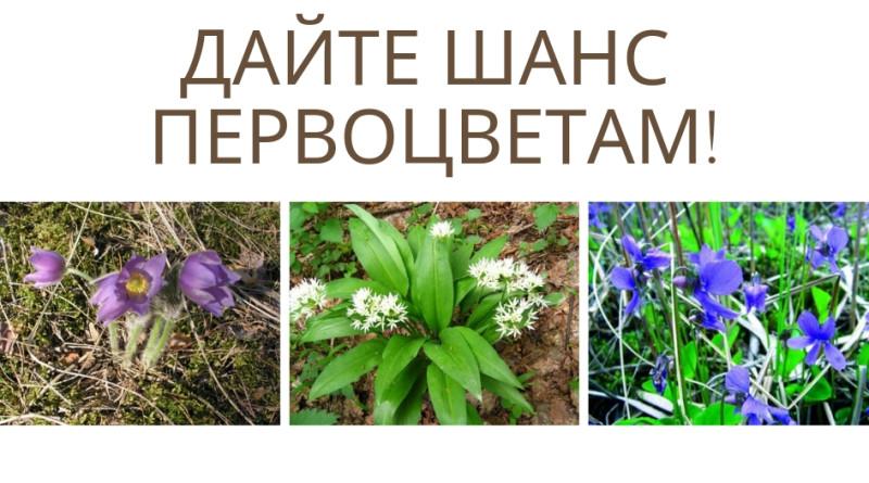Дайте шанс первоцветам