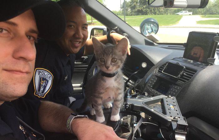 «Когда-то я был бездомным котёнком, а теперь я полицейский. Следуйте за своей мечтой!»
