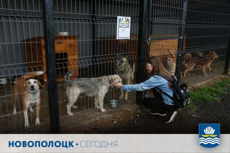 Пункт временного содержания безнадзорных животных в Новополоцке