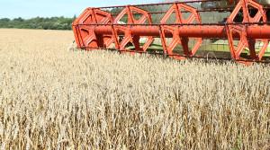 Полоцкий район вошел в список неблагоприятных для производства сельхозпродукции