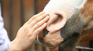 Коня в беде не оставили новополоцкие спасатели