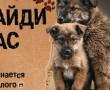 В приюте на территории Новополоцкой спецавтобазы бездомные животные ждут хозяев