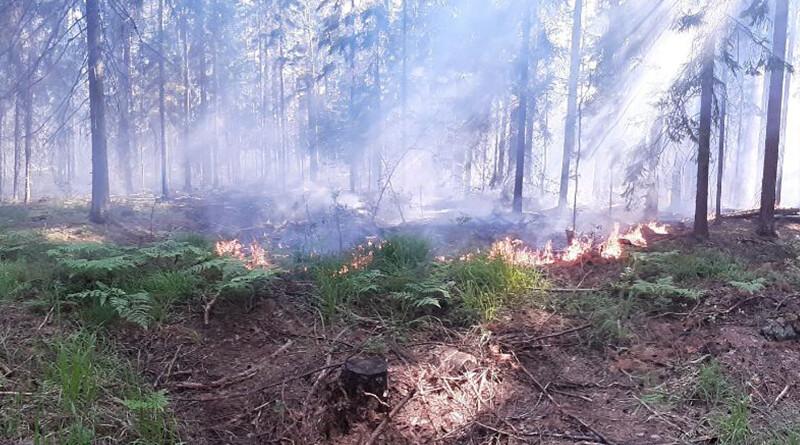 горящий лес1