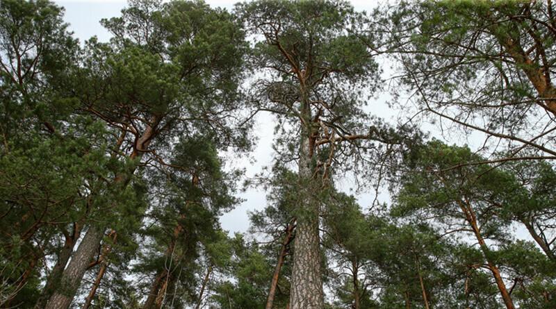 лес-800x445
