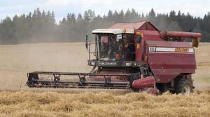 Аграрии Витебской области убрали почти половину площадей зерновых
