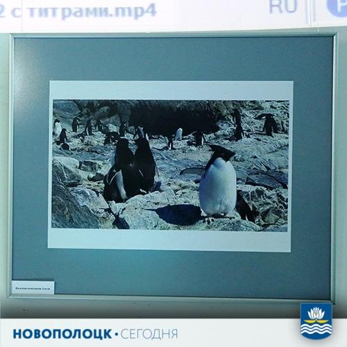 выставка_Антарктида3