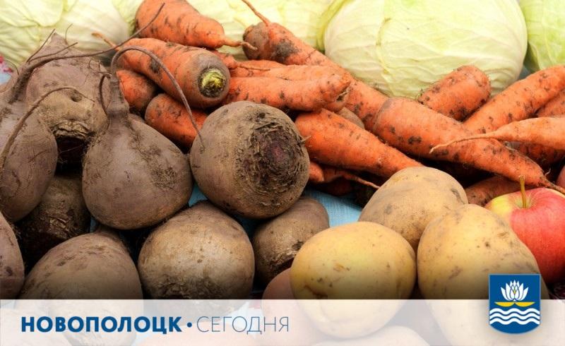 овощи_продукты