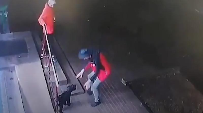 кража_собака