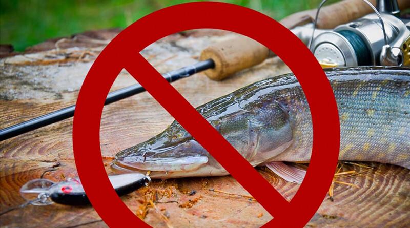 рыба_запрет на лов1